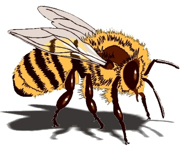 honey_bee_large.jpg