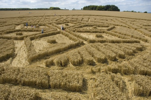 dentro Woolstone-Hill-Oxfordshire-13-08-05-Wheat-P3.jpg