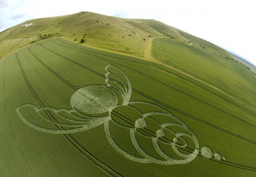 5 Milk-Hill-Alton-Barnes-Wiltshire-Wheat-26-06-04-.jpg