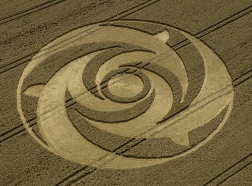 23 Beacon-Hill-Newbury-Berkshire-Wheat-28-07-2004.jpg