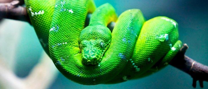 130430-green-snake1