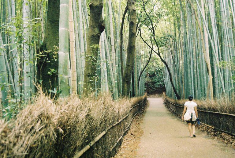 SHINRIN YOKU-GUARIRE A CONTATTO CON LA NATURA